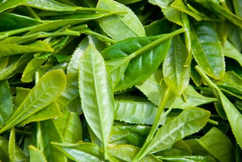桑の葉茶ダイエット